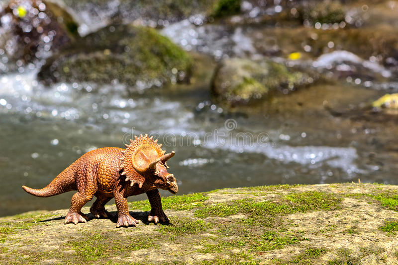 Triceratops walking on old rock with water in background stock photos