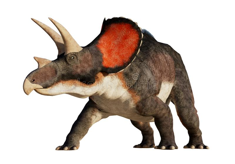 Triceratops on a White Background stock illustration