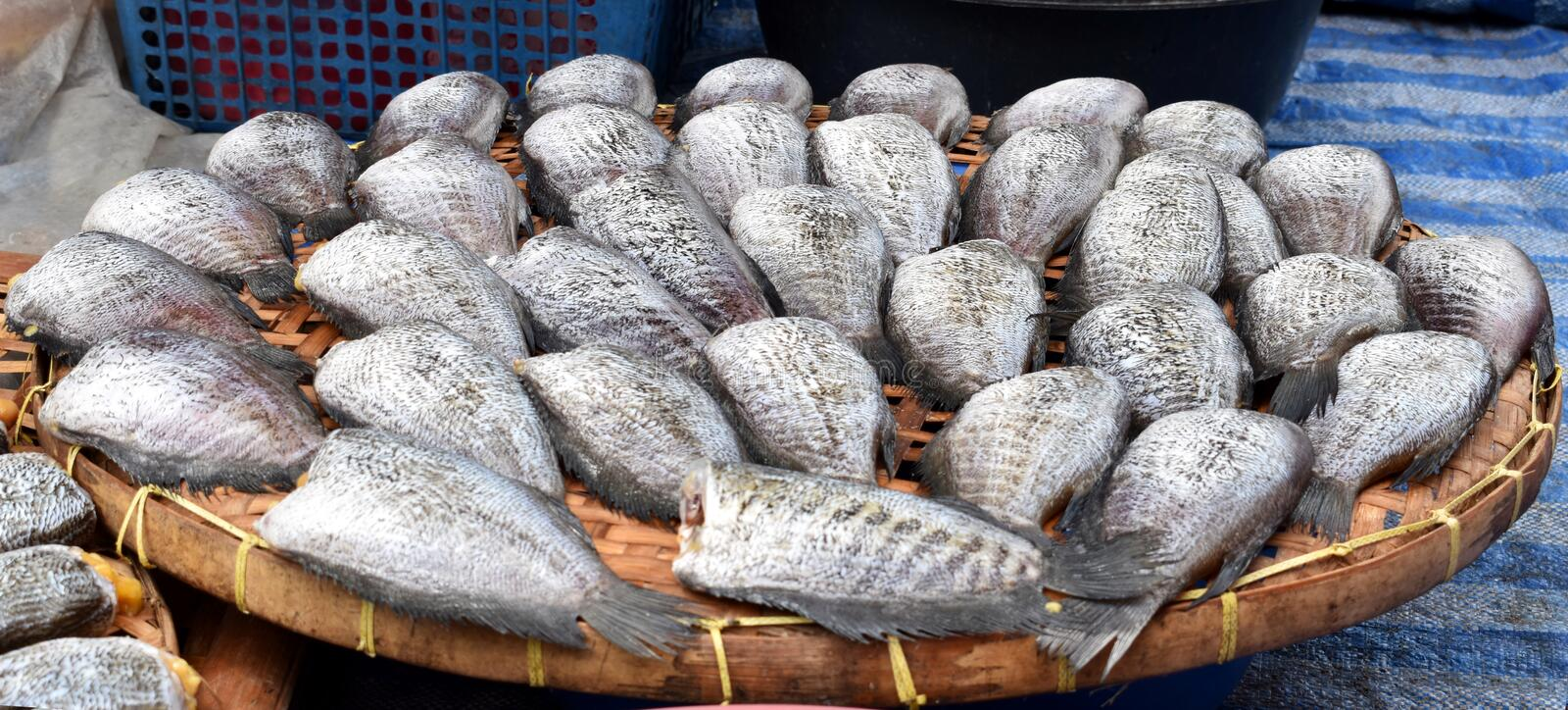 Trichogaster pectoralis dried fish on threshing basket stock photography