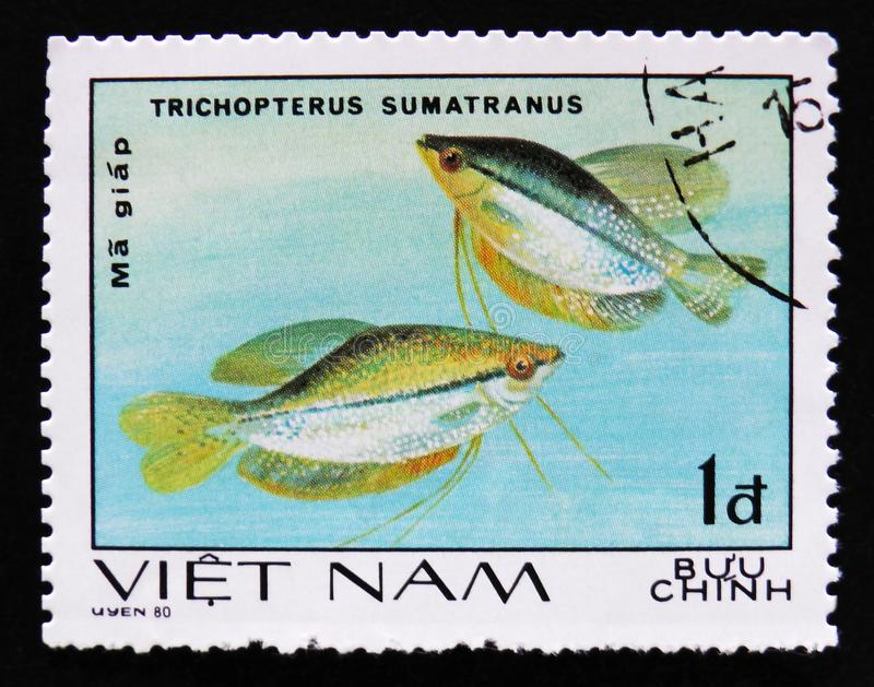 Trichopterus sumatranus, series Aquarium Fishes, circa 1980. MOSCOW, RUSSIA - APRIL 2, 2017: A post stamp printed in Vietnam shows a Trichopterus sumatranus stock images