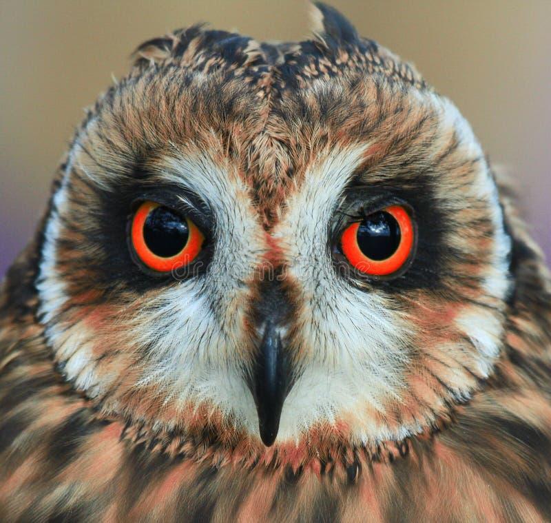 Trick eller treaten säger owlen arkivbild