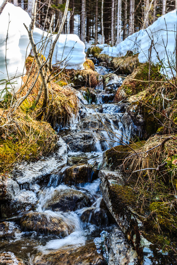 A trickling water stream that runs through the woods. In Norway stock photo