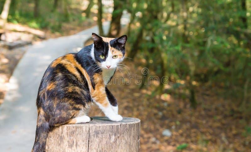 Tricolor кот сидя на пне дерева в парке стоковые изображения