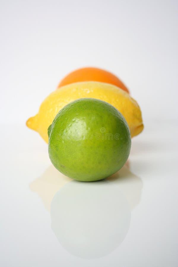 Tricolor citrus stock images