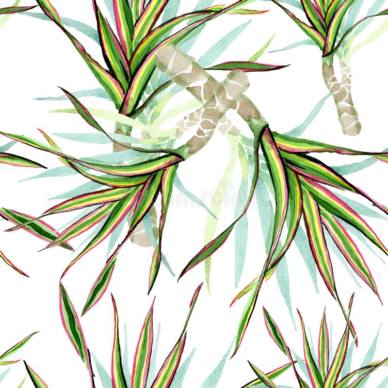 Tricolor Dracaenamarginata Uppsättning för vattenfärgbakgrundsillustration Seamless bakgrund mönstrar vektor illustrationer