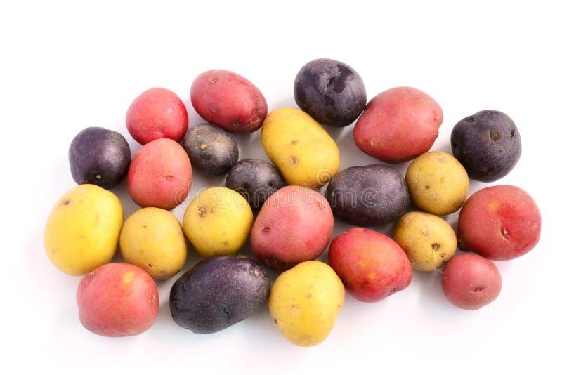 Tricolor mini- potatisar arkivfoto