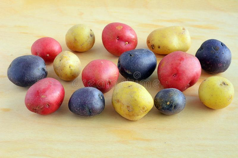 Tricolor mini potatoes on wood background stock photo