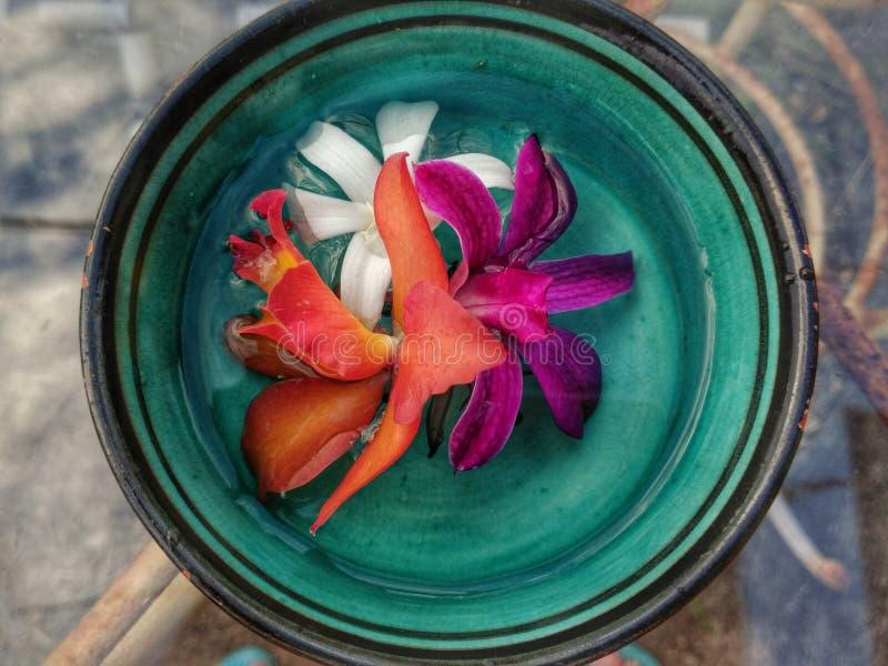 Tricolor orkidér 2 fotografering för bildbyråer