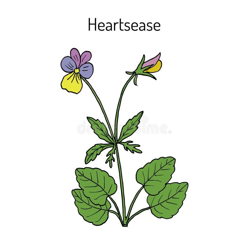 Tricolor van de Heartseasealtviool, sier en geneeskrachtige installatie royalty-vrije illustratie