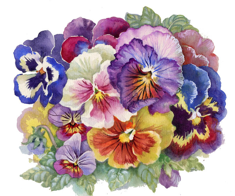 Tricolor Viola royaltyfri illustrationer