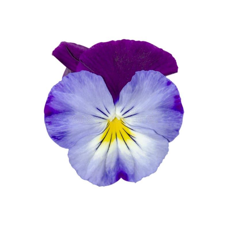 Tricolore de l'alto, connu sous le nom de corpulence, facilité du coeur, plaisir du coeur image libre de droits