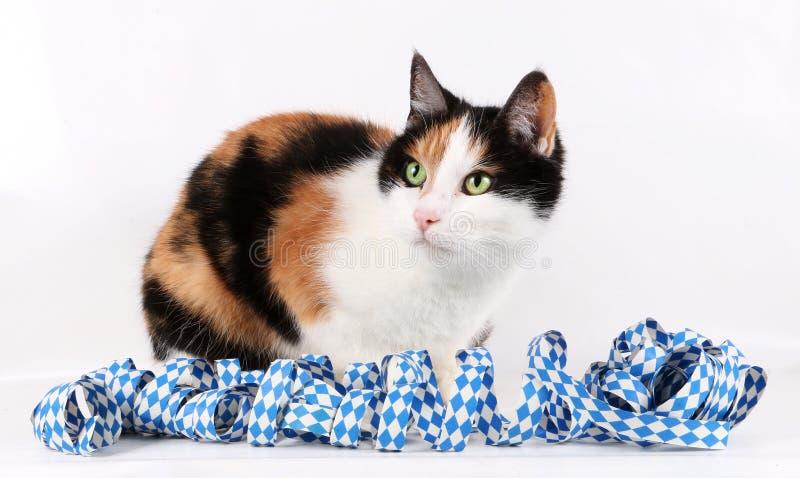 Oktoberfest cat portrait stock images