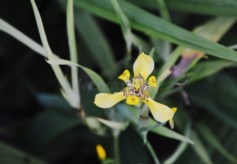 Tricolororchidee van Vanda op tak in tuin stock afbeeldingen