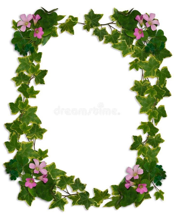 Trifoglio di fioritura del bordo dell'edera illustrazione di stock