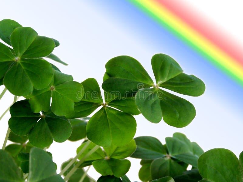 Trifoglio e Rainbow. fotografia stock libera da diritti