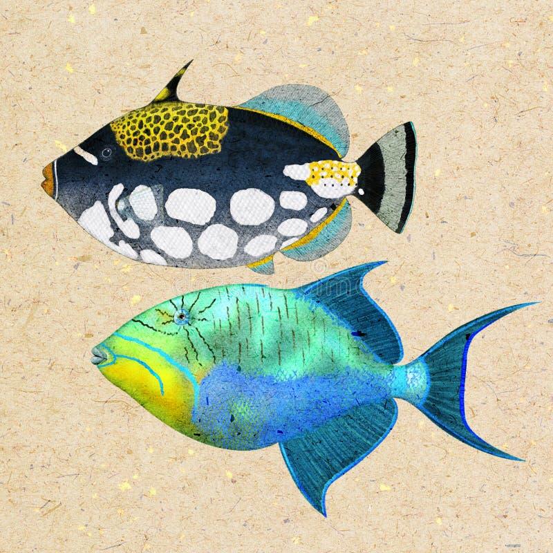 Triggerfish vector illustratie