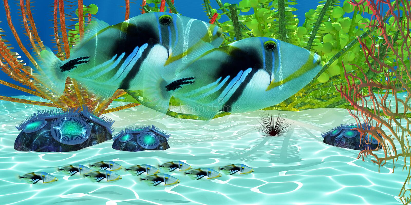 triggerfish стоковое фото rf