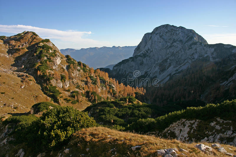 Triglav NP mountain landscape with autumn larches. And small pines royalty free stock photos