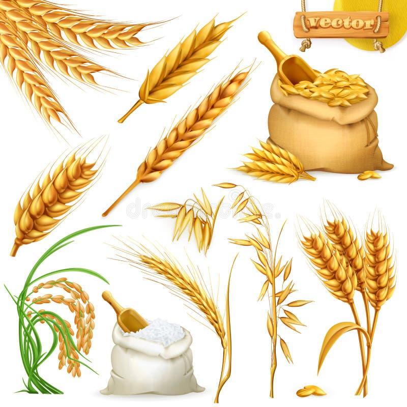 Trigo, cevada, aveia e arroz Grupo do vetor do ícone dos cereais ilustração royalty free