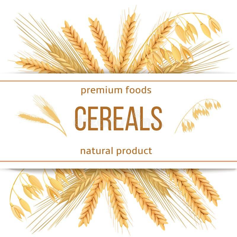 Trigo, cevada, aveia e centeio grupo do vetor do ícone 3d Quatro cereais e orelhas com alimentos superiores do texto, produto nat ilustração stock