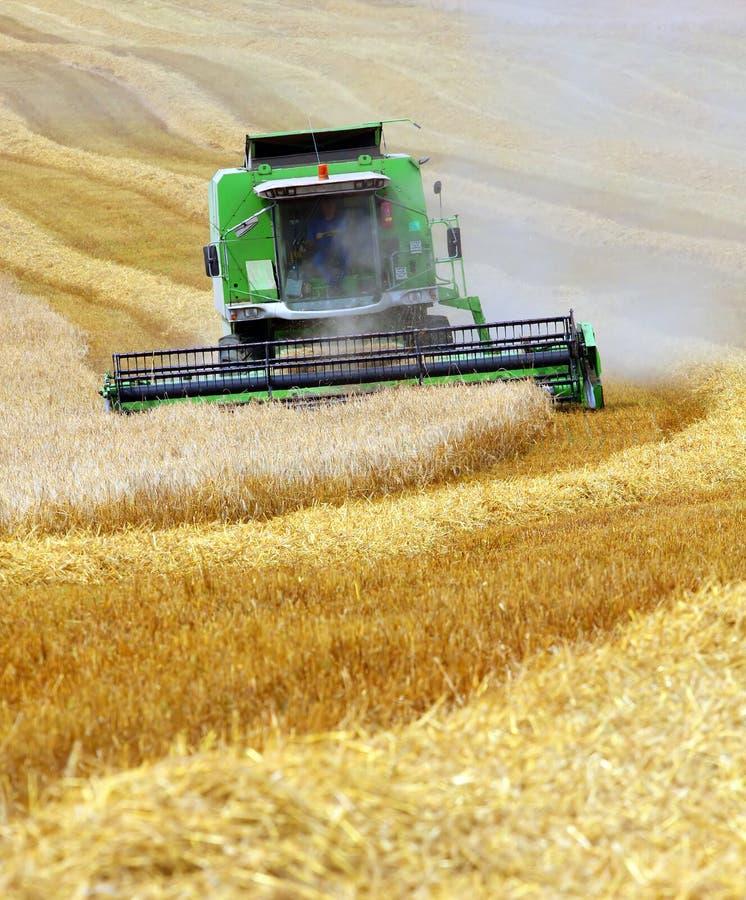 Trigo da colheita mecanizada fotografia de stock