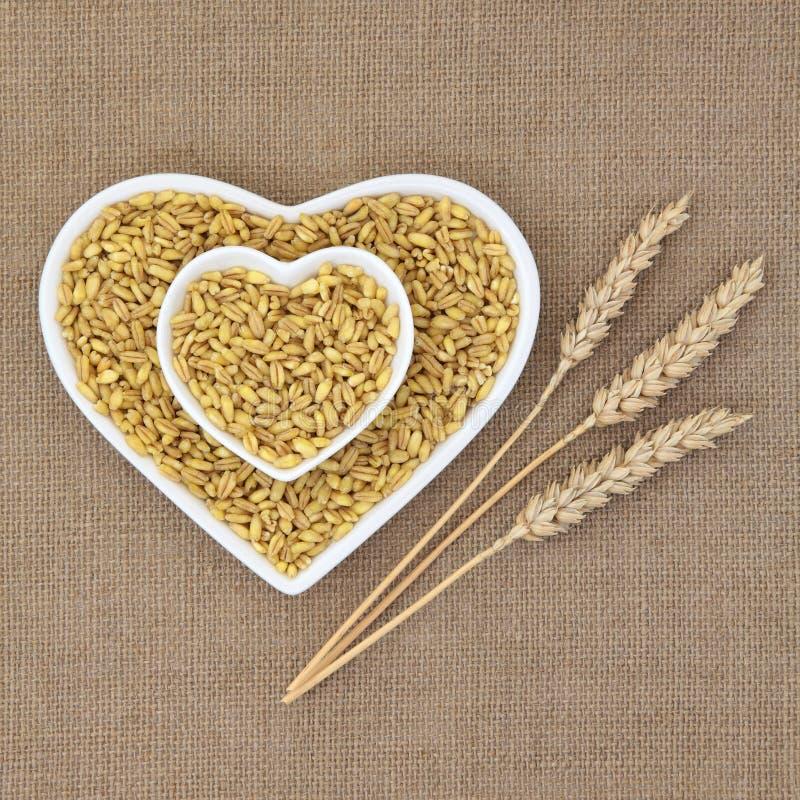 Trigo de Kamut Khorasan imagem de stock