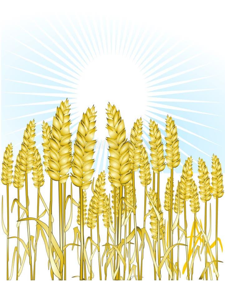 Trigo de pão ilustração royalty free