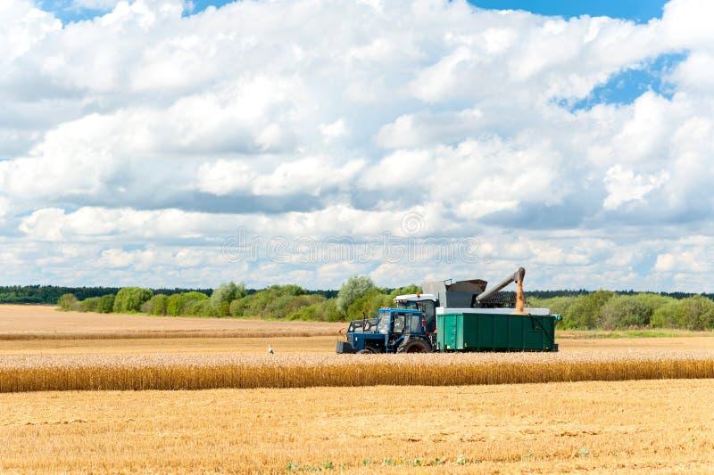 Trigo del corte de la cosechadora en el campo Tiempo de cosecha imagen de archivo