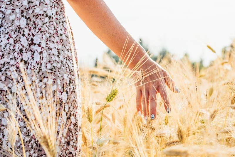 Trigo dourado tocante da mão da mulher fotografia de stock royalty free