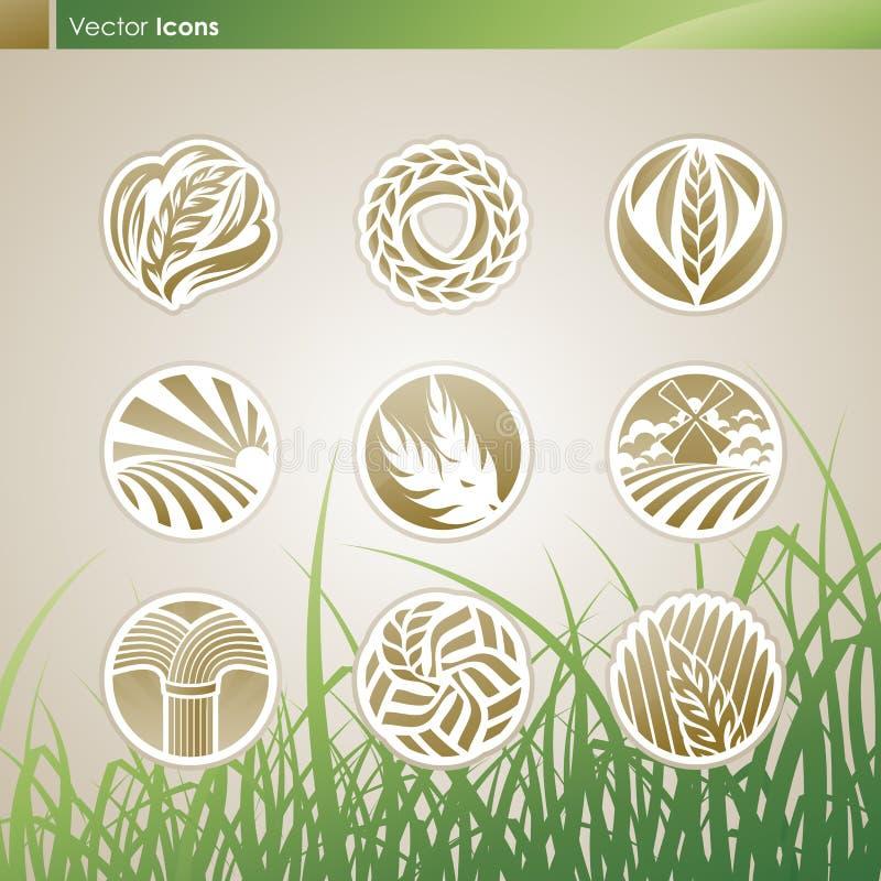 Trigo e centeio. Moldes do logotipo do vetor ajustados. ilustração do vetor