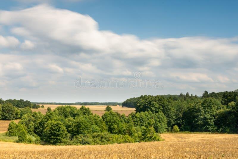 Trigo que crece entre árboles Nubes rápidas en el fondo fotografía de archivo