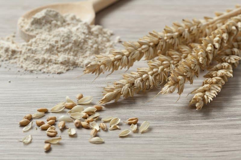 Trigo, semillas y harina secados fotografía de archivo