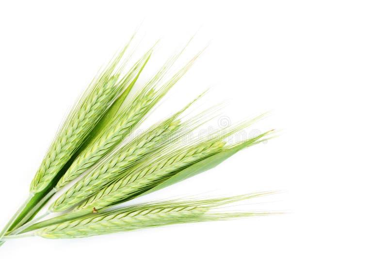 Trigo verde foto de stock