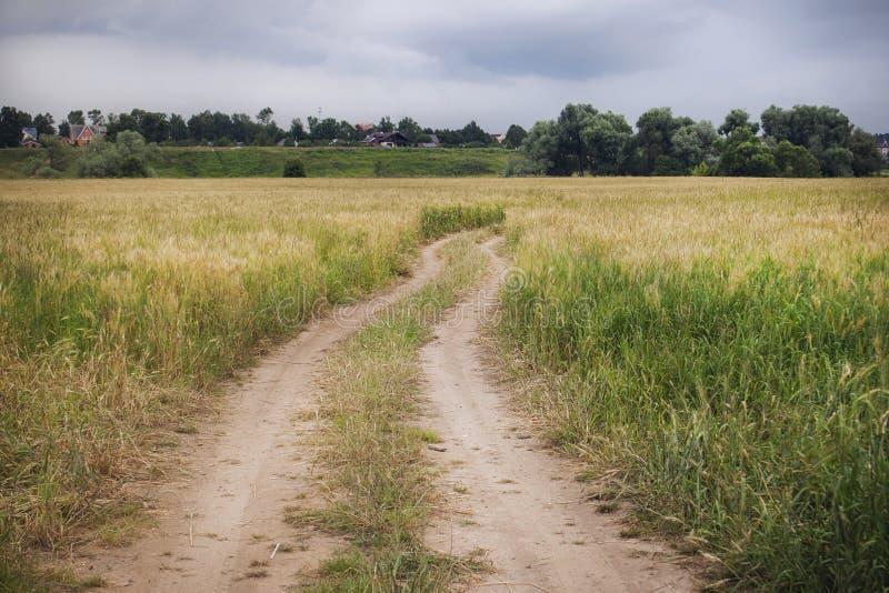 Trilha da estrada pavimentada através de um campo do centeio à vila fotos de stock royalty free