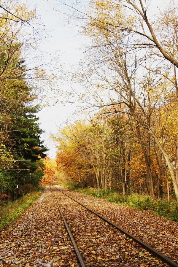 Trilha de estrada de ferro na floresta do outono imagem de stock