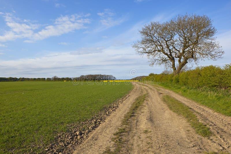 Trilha de exploração agrícola e árvore de cinza fotos de stock royalty free
