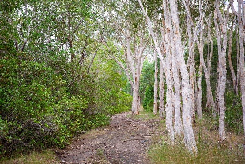 Trilha de passeio em Bushland fotografia de stock