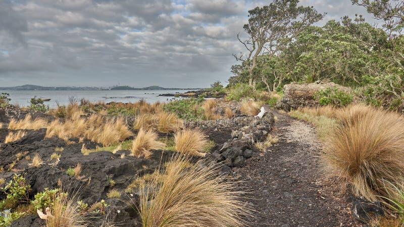 A trilha de passeio a McKenzie late do cais Nova Zelândia de Rangitoto imagem de stock