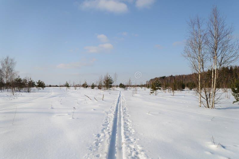 Trilha do esqui no campo nevado perto da borda da floresta imagem de stock
