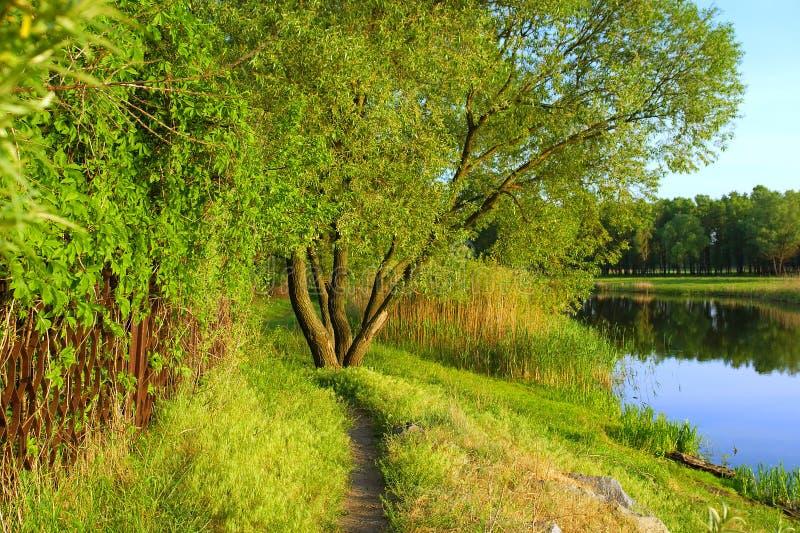 Trilha do país perto do lago imagem de stock royalty free