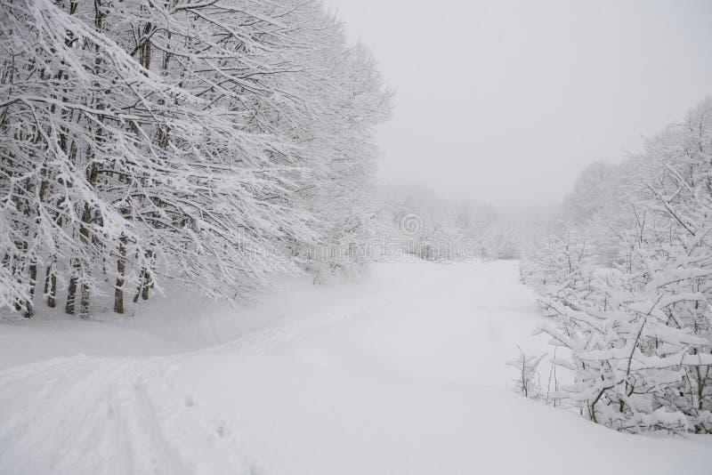 Trilha nevoenta do esqui da floresta fotos de stock royalty free