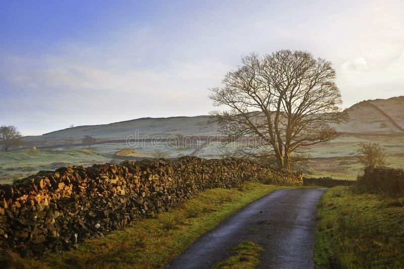 A trilha, a parede e a árvore na noite do inverno iluminam-se imagem de stock