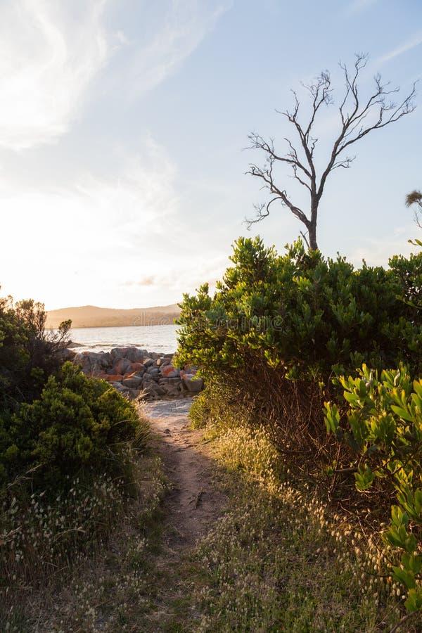 Trilha a uma praia com luz solar foto de stock