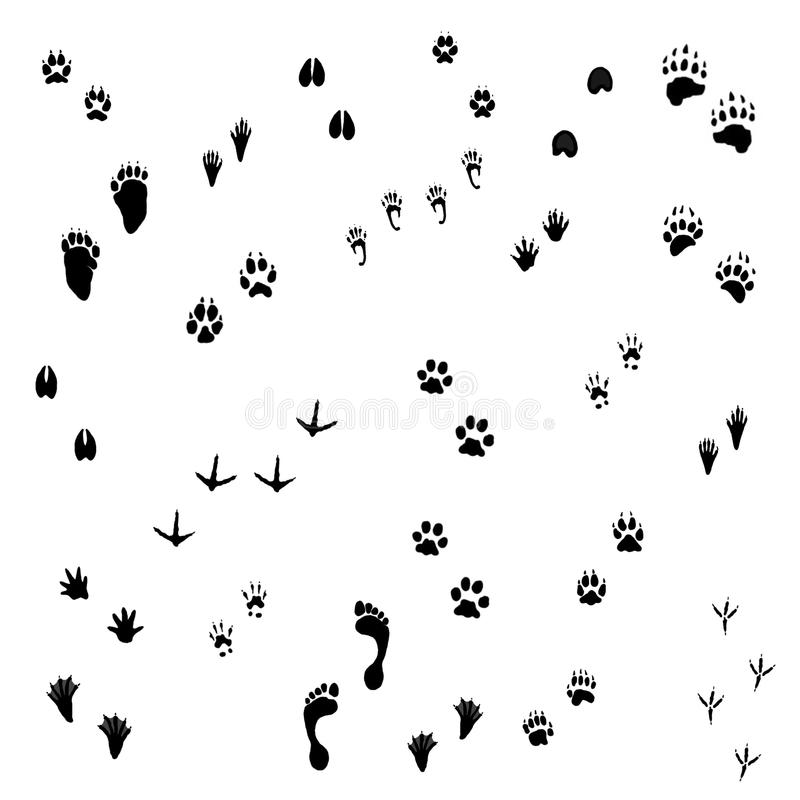 Trilhas animais ilustração royalty free