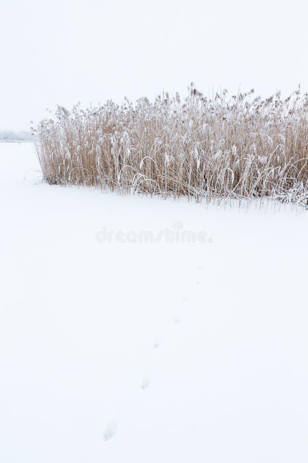 Trilhas animais na neve foto de stock royalty free