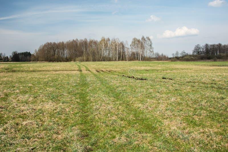 Trilhas da roda em um prado verde, no grupo de árvores e nas nuvens em um céu imagem de stock royalty free