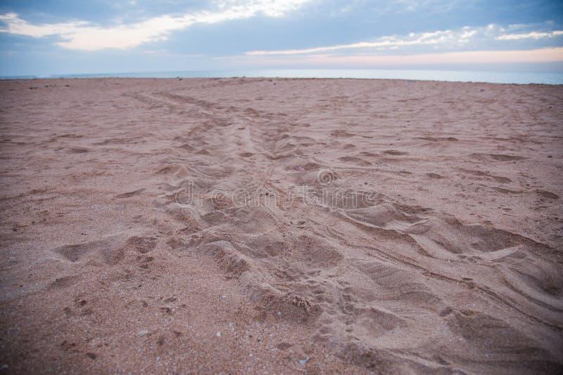 Trilhas da tartaruga de mar de Flatback ao mar foto de stock