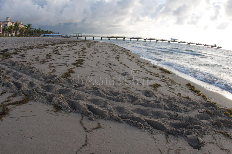 Trilhas da tartaruga na praia foto de stock