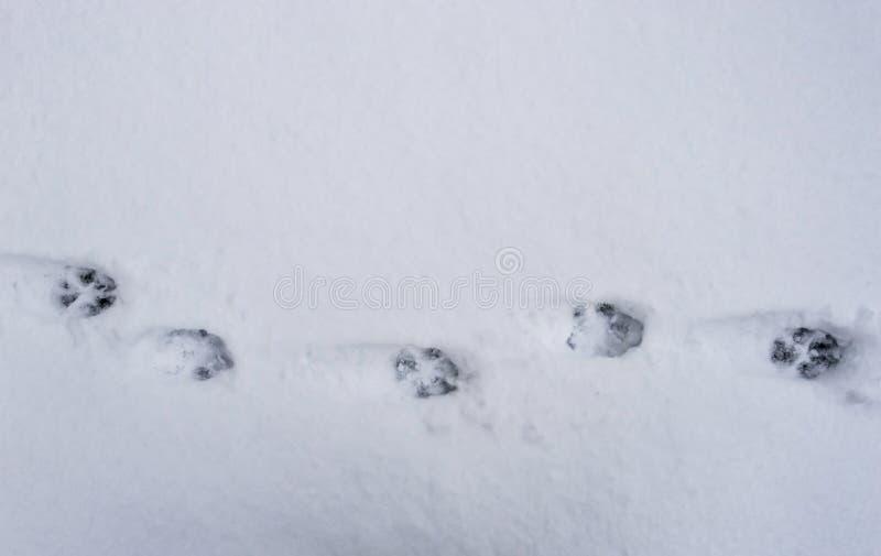 Trilhas do cão na neve imagens de stock