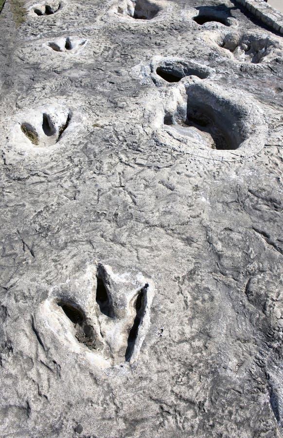 Trilhas do dinossauro em Texas imagem de stock royalty free